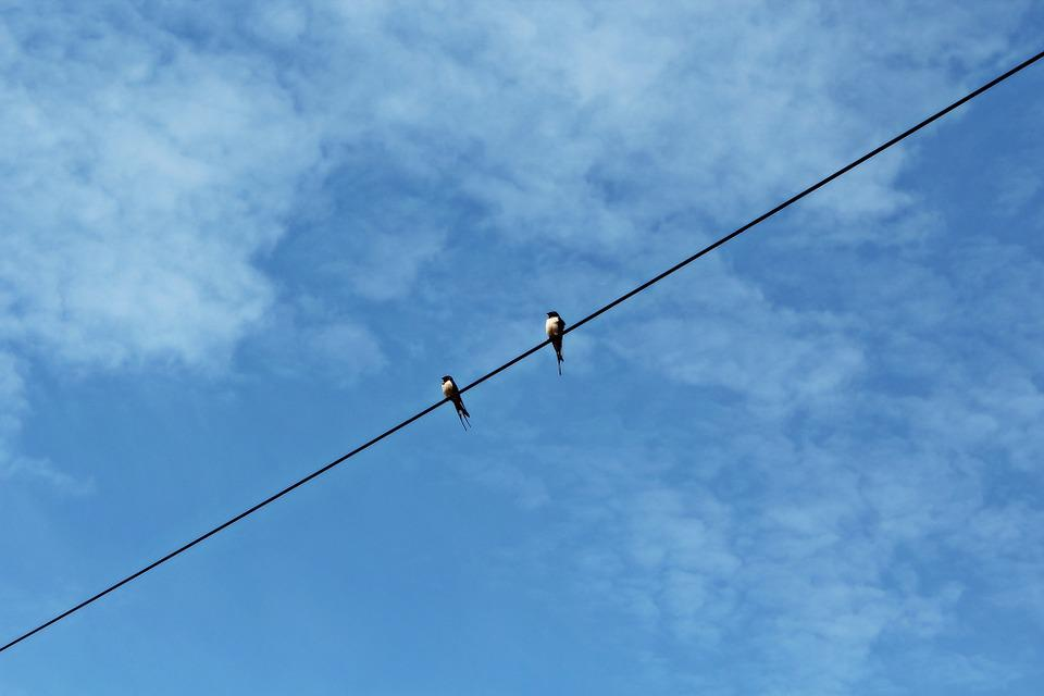 Swallows, Sky, Clouds, Blue, Power Control Unschwalben