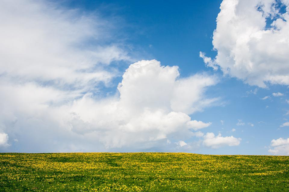 Field, Flowers, Sky, Clouds, Horizon, Mountain, Hill