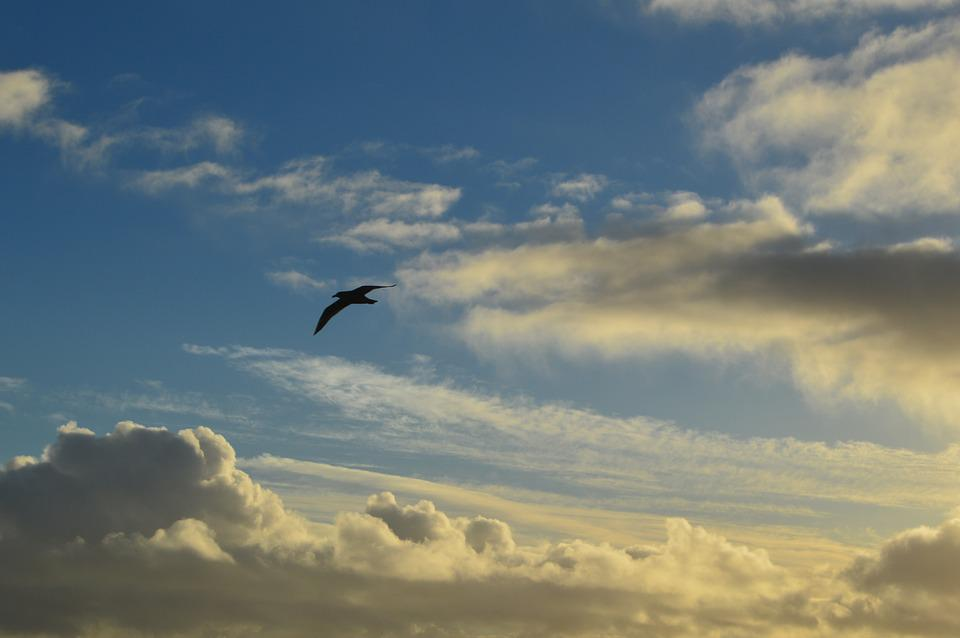 Clouds, Seagull, Sky, Nature, Flying