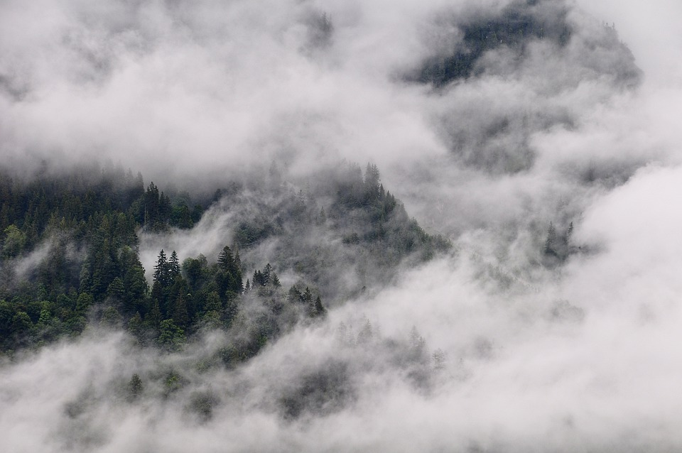 Forest, Trees, Clouds, Fog