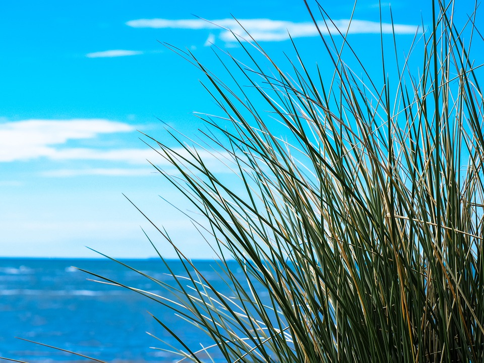 Sea, Sky, Grass, Grasses, Clouds, Sun And Sea, Mood