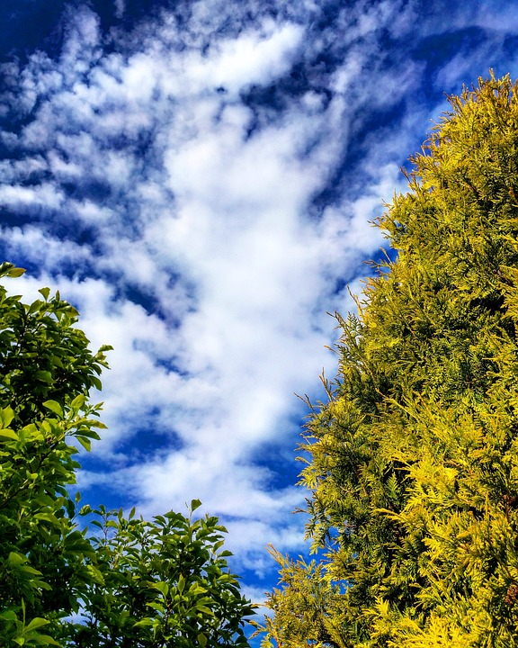 Trees, Conifer, Clouds, Hd, Blue Sky, English, Garden