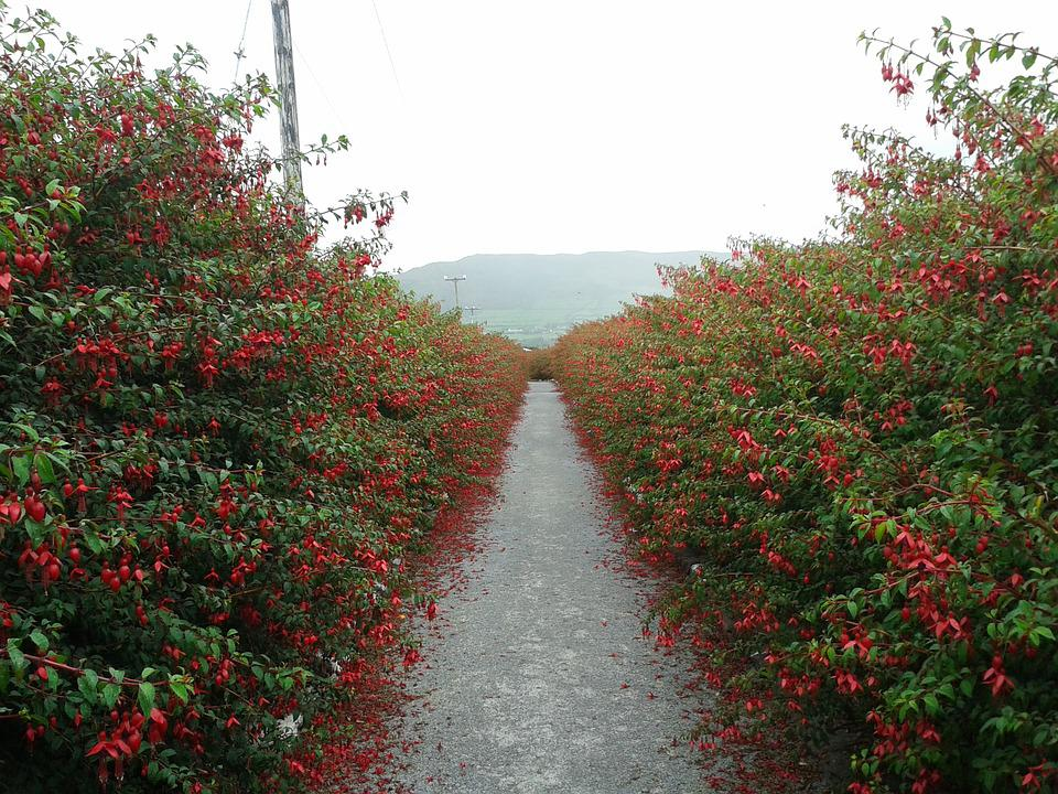 Ireland, Away, Red, Hedge, Hedges, Hiking, Clouds