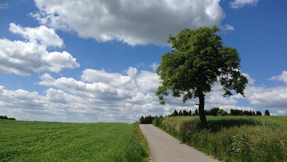 Tree, Landscape, Nature, Way, Green, Clouds, Malopolska