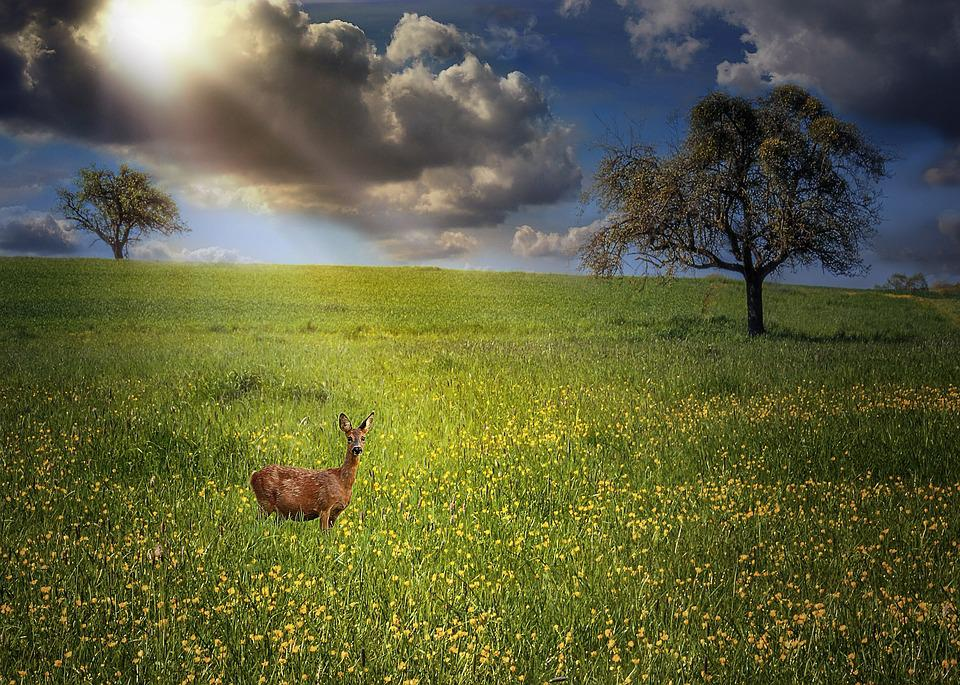 Animals, Nature, Clouds, Meadow, Landscapes, Grass