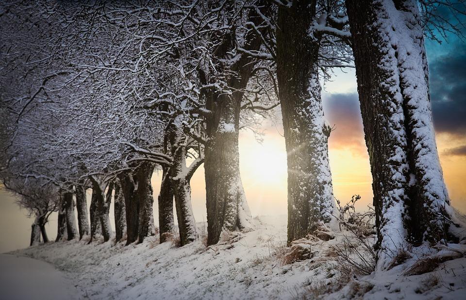 Sunrise, Trees, Mood, Winter, Light, Clouds, Sun, Sky