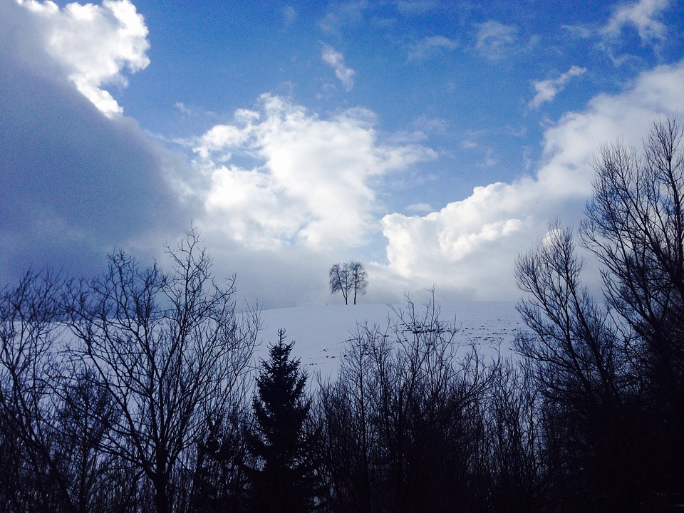 Trees, Nature, Clouds