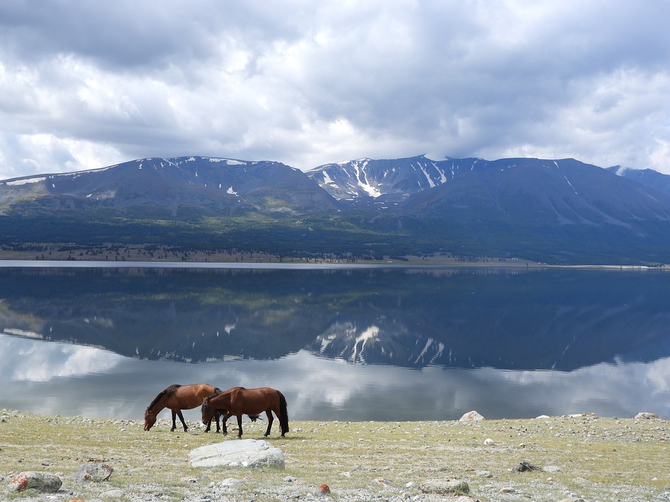 Mountains, Lake, Horses, Horse, Clouds, Reflection