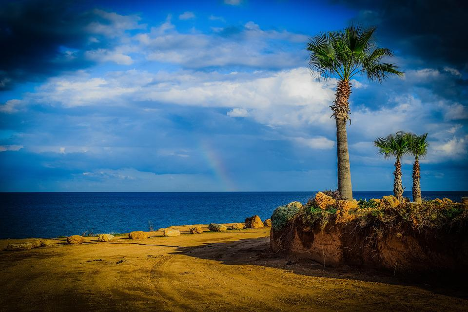 Palm Trees, Sky, Clouds, Dirt Road, Seashore, Scenery