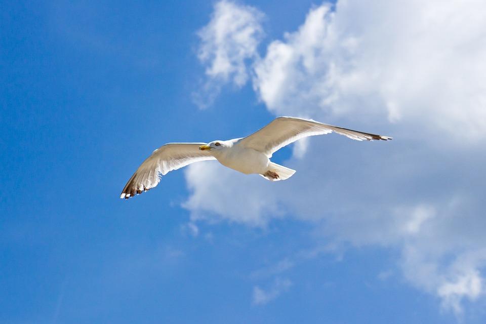 Seagull, Clouds, Sea