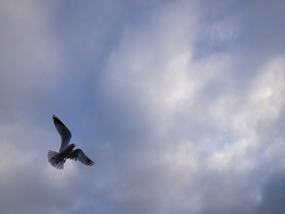 Seagull, Sky, Clouds, Fly