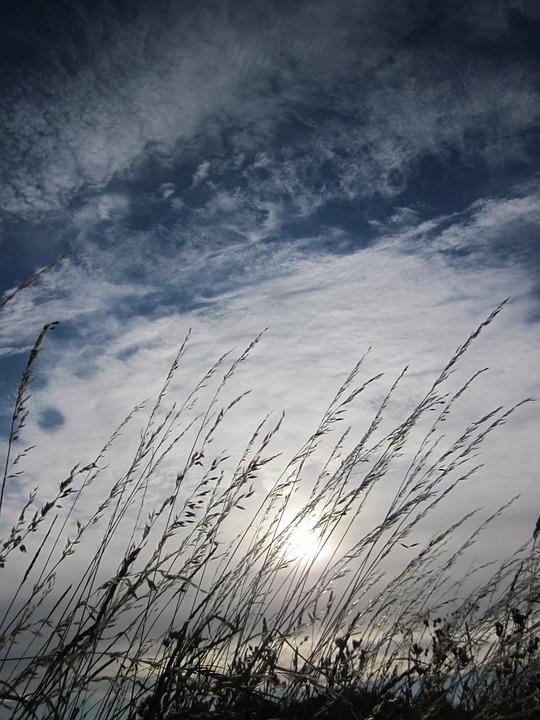 Grain, Sky, Clouds