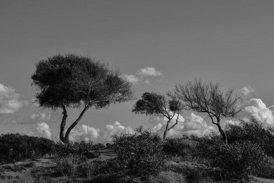 Trees, Dunes, Nature, Landscape, Scenery, Sky, Clouds