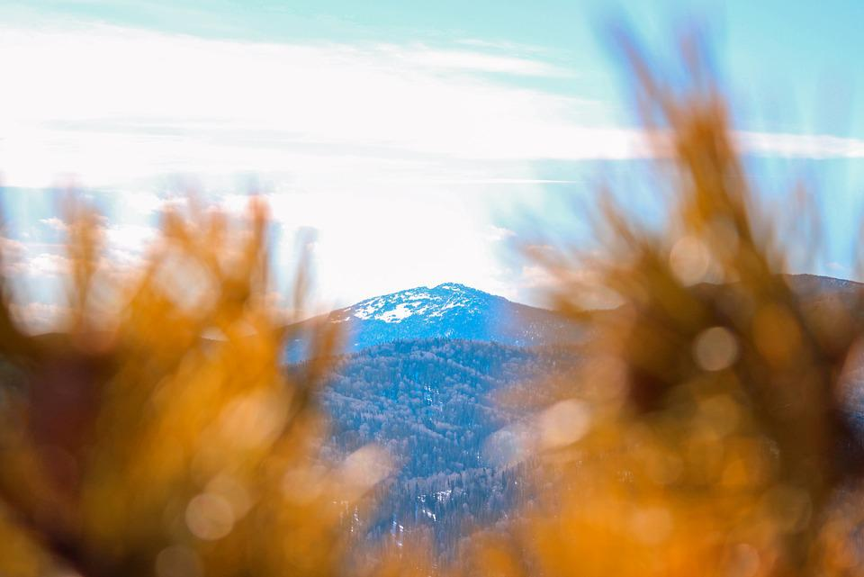 Mountain, Snow, Clouds, Sky, Needles, Christmas Tree