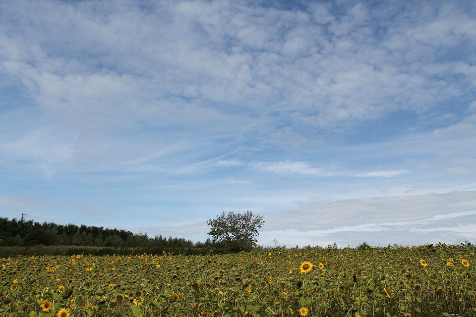 Summer, Tree, Clouds, Landscape, Sky, Nature, Green