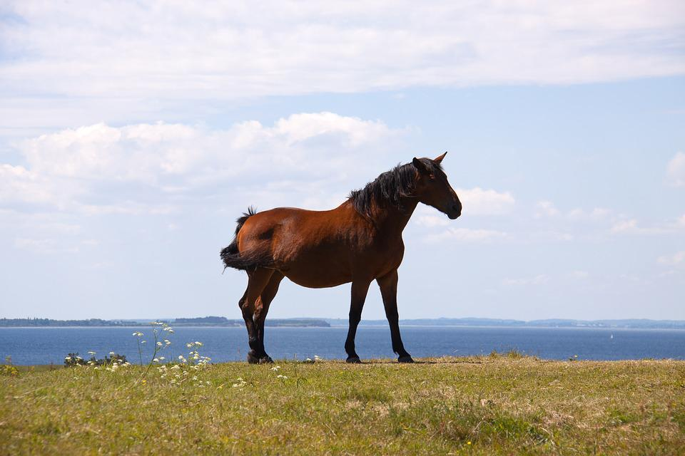 Horse, Profile, Hill, Ocean, Horizon, Cloudscape