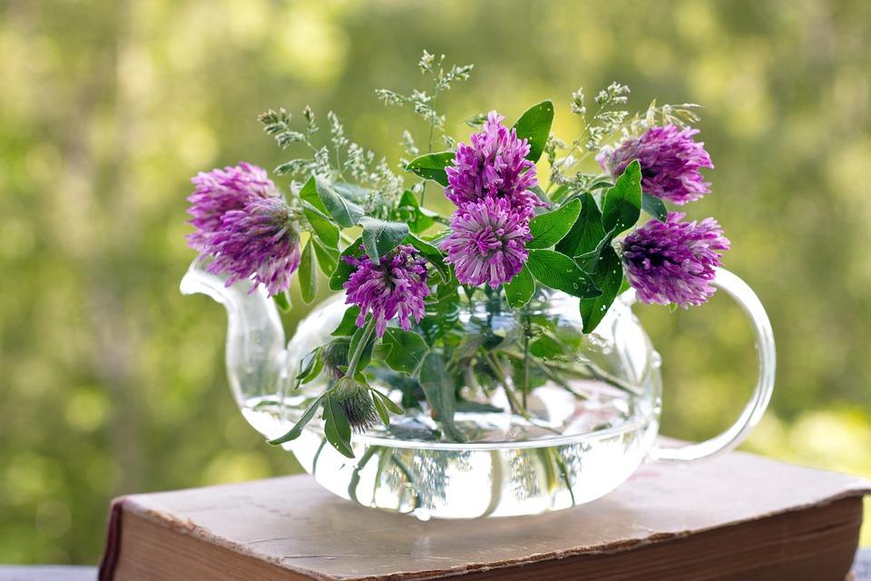 Flowers, Clover, Summer, Nature, Moment, Sun, Mood