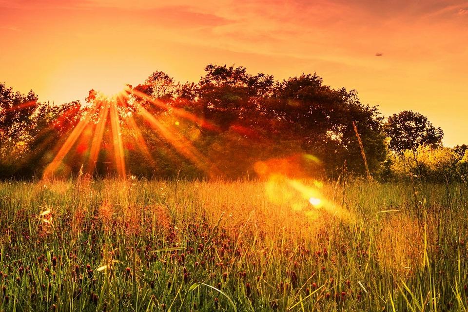 Clover, Sunset, Trees, Sky, Field, Nature, Season