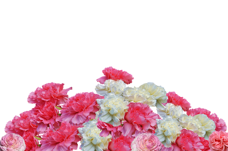 Free Photo Cloves Flowers Carnation Pink Blossom Bloom