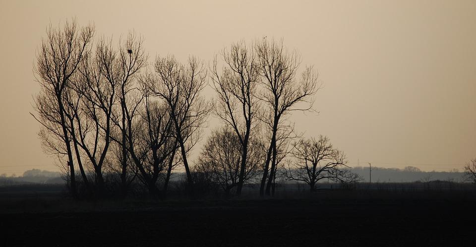 Sunset, Color, Cloud, Wood, Clump