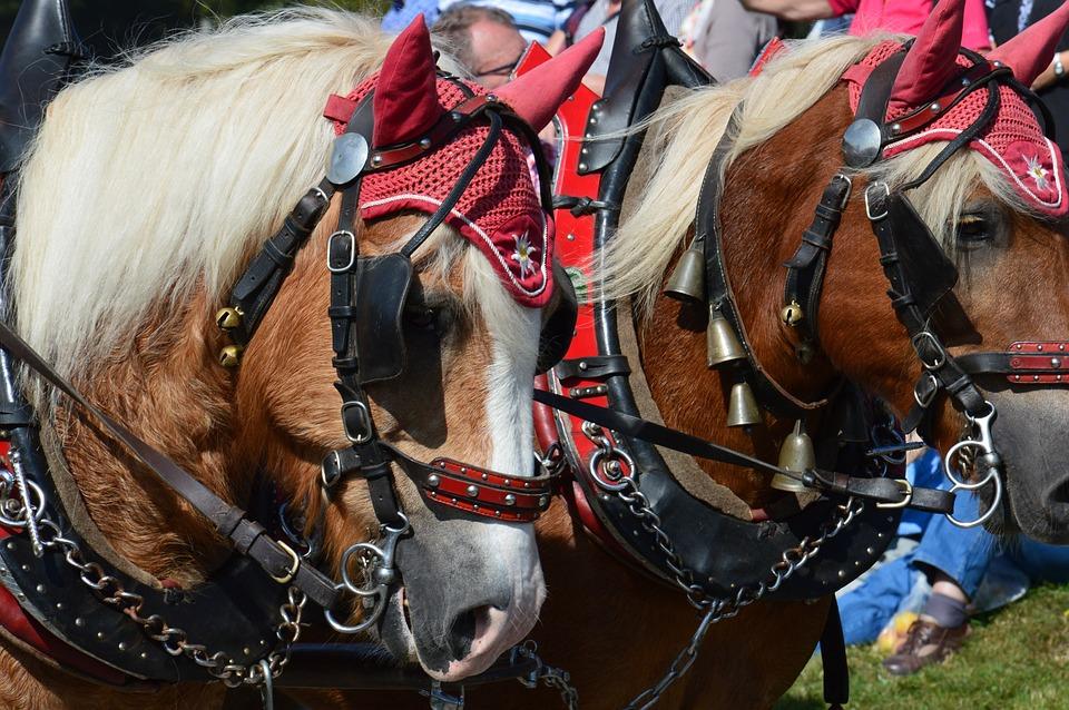 Horses, Horse, Coach