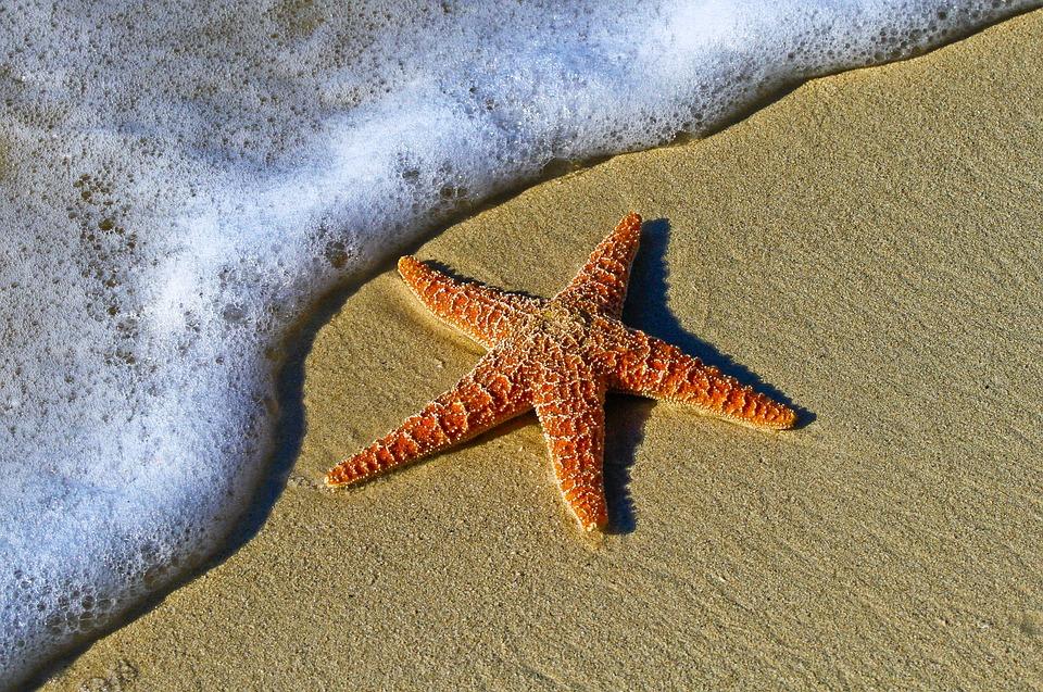 Animal, Beach, Bubbles, Coast, Echinoderm, Invertebrate