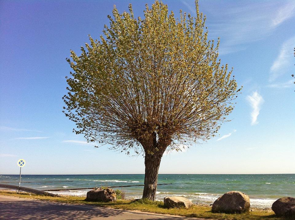 Baltic Sea, Boltenhagen, Summer, Beach, Coast, Blue