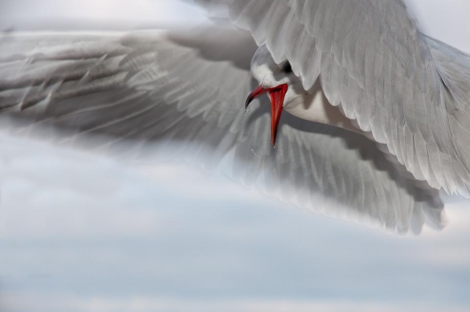 Seagull, Bird, Close, Water Bird, Sea, Fly, Coast, Bill