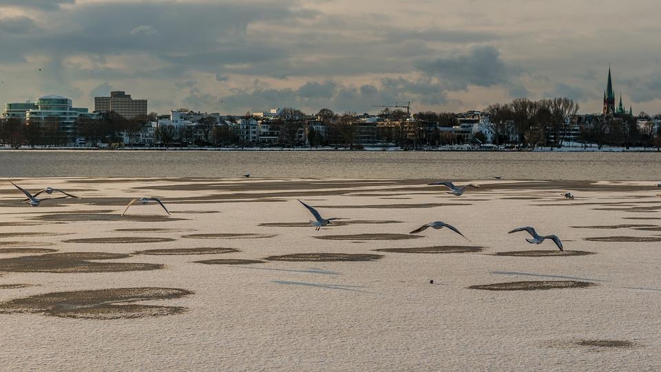 Waters, Beach, Sand, Coast, Sea, Snow, Winter, Hamburg
