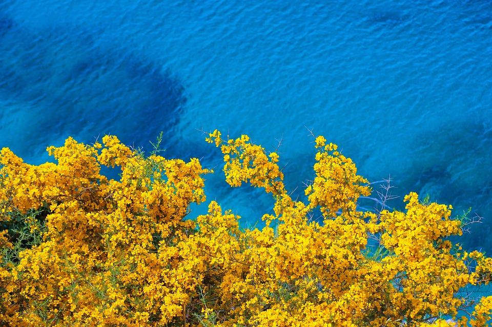 Flowers, Coast, Sea, Yellow Flowers, Bloom, Plant, Tree