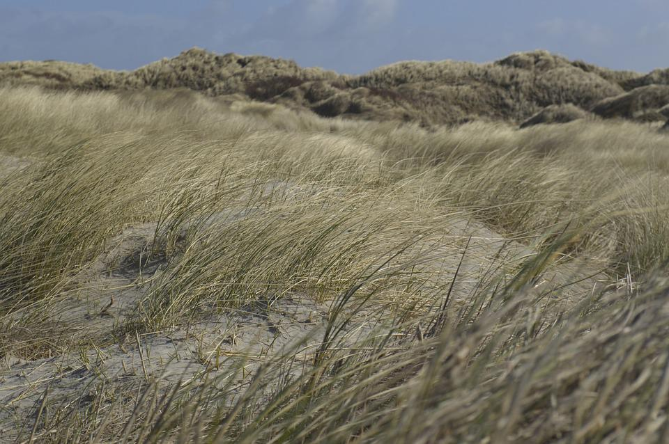Dunes, Beach, Focus, Nature, Sand, Sky, Blue, Coast