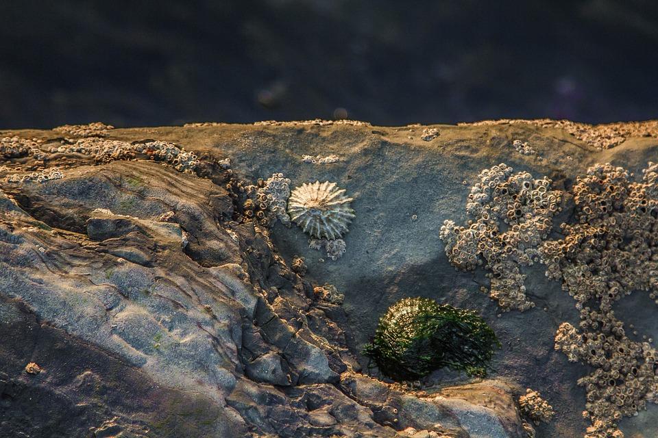 Sea, Shell, Stones, Coast, England, Dorset