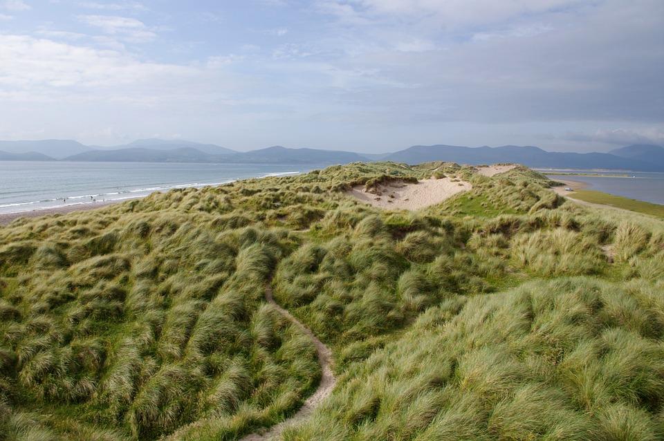 Grass, Coast, Sea, Seaside, Ocean, Coastline