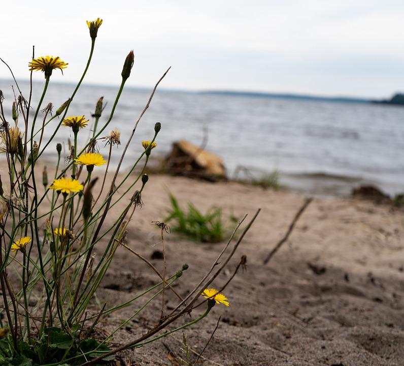 Flowers, Beach, Seashore, Coast, Plants, Sand, Water