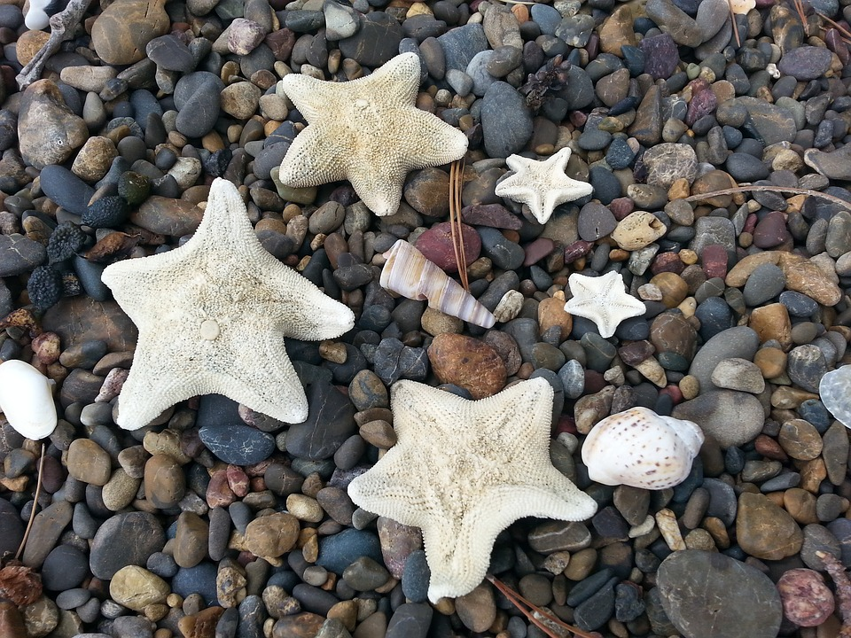 Starfish, Beach, Seashore, Coast, Nature, Shell
