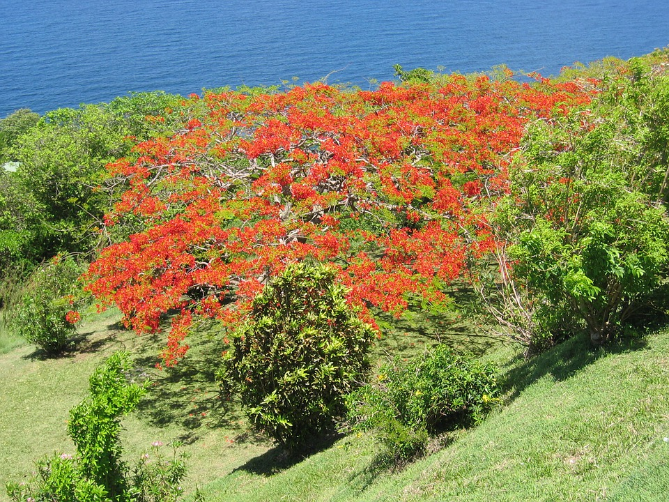 Tree, Caribbean, Flowers, Tropical, Coast, Exotic