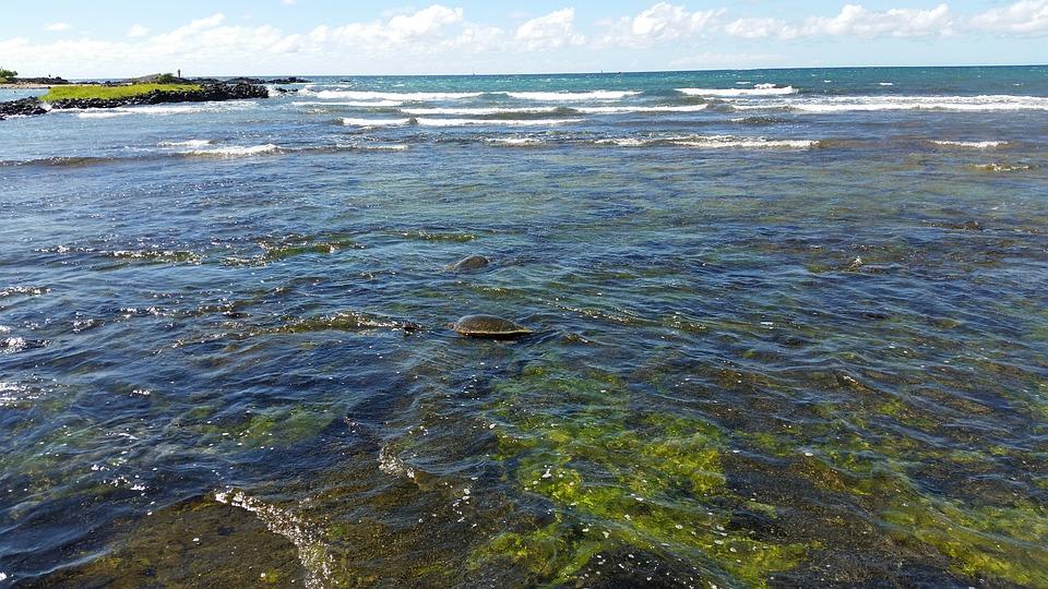Sea, Ocean, Water, Underwater, Coast, Beach, Mood