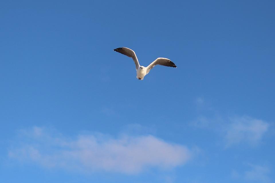 Seagull, Flight, Wing Beat, Sky, Coast