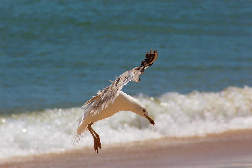 Seagull, Beach, Sea, Flying, Flight, Wing, Coast