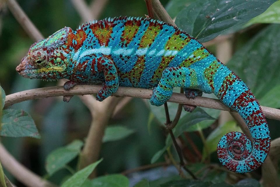 Animals, Reptile, Schuppenkriechtier, Coastal Lowland