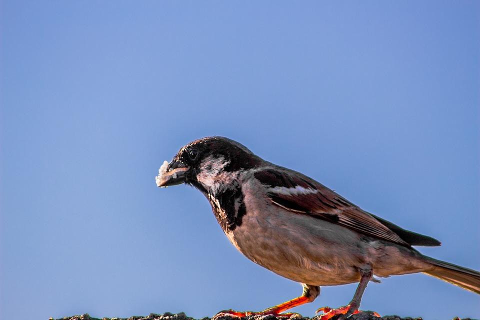 Sparrow, Coastline, Relax, Africa, Daylight, Landscape