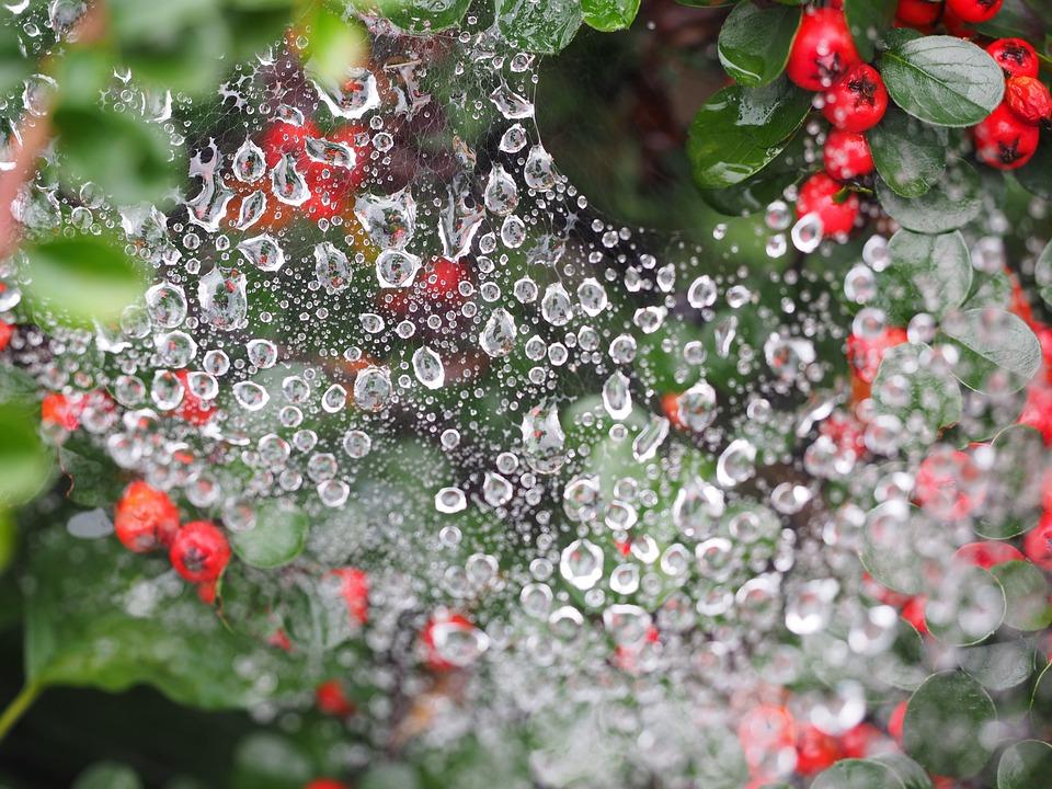 Drip, Cobweb, Drop Of Water, Beaded, Droplets