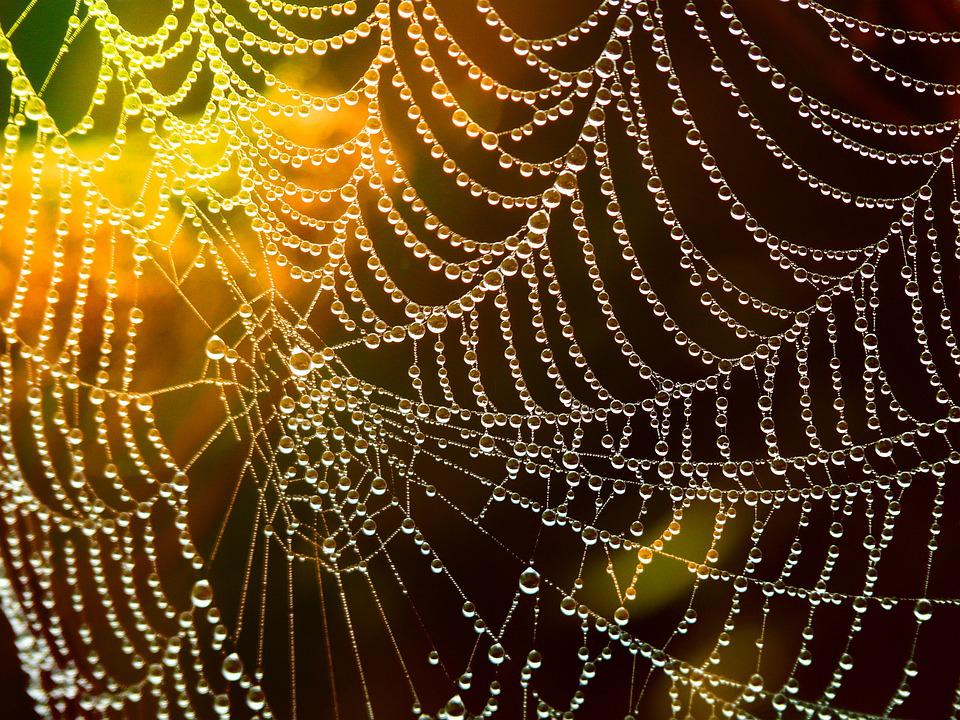 Network, Cobweb, Dewdrop, Drop Of Water, Lichtspiel