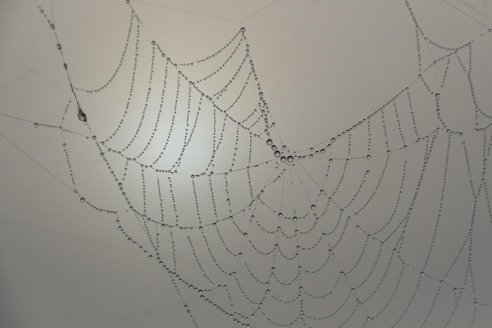 Cobweb, Beaded, Morgentau