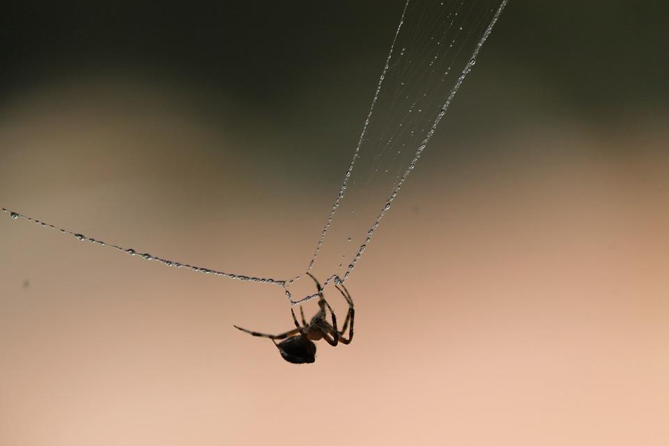 Spider, Web, Nature, Insect, Spiderweb, Cobweb, Natural
