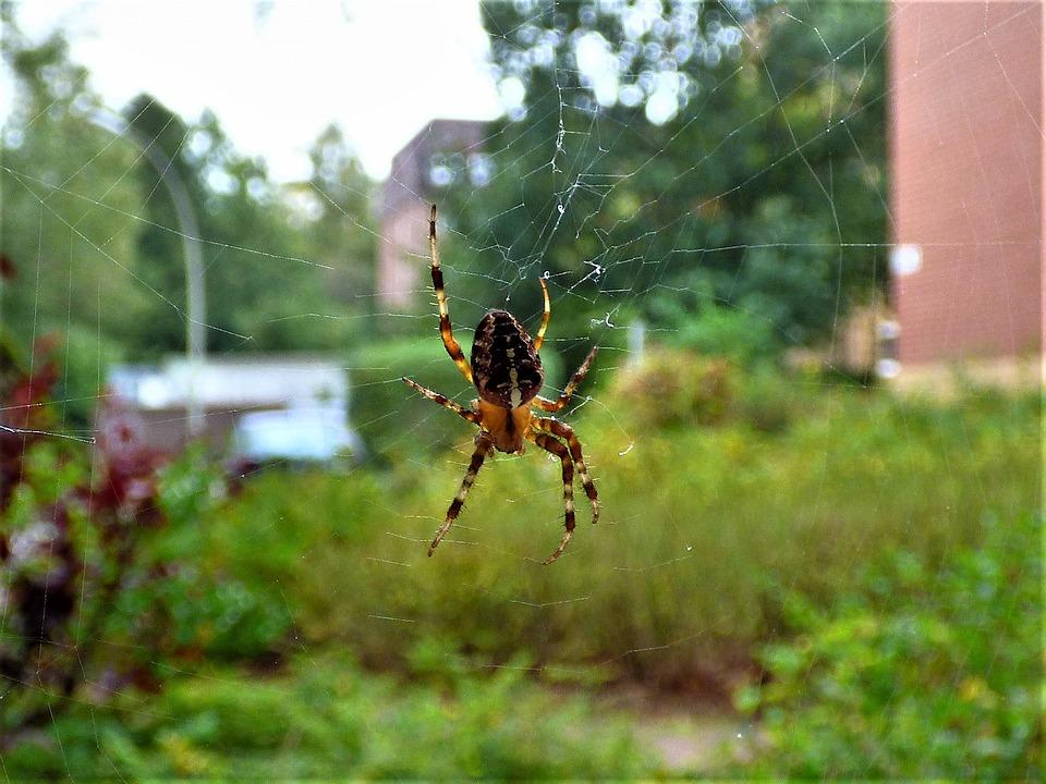 Spider, Network, Close, Cobweb, Arachnid