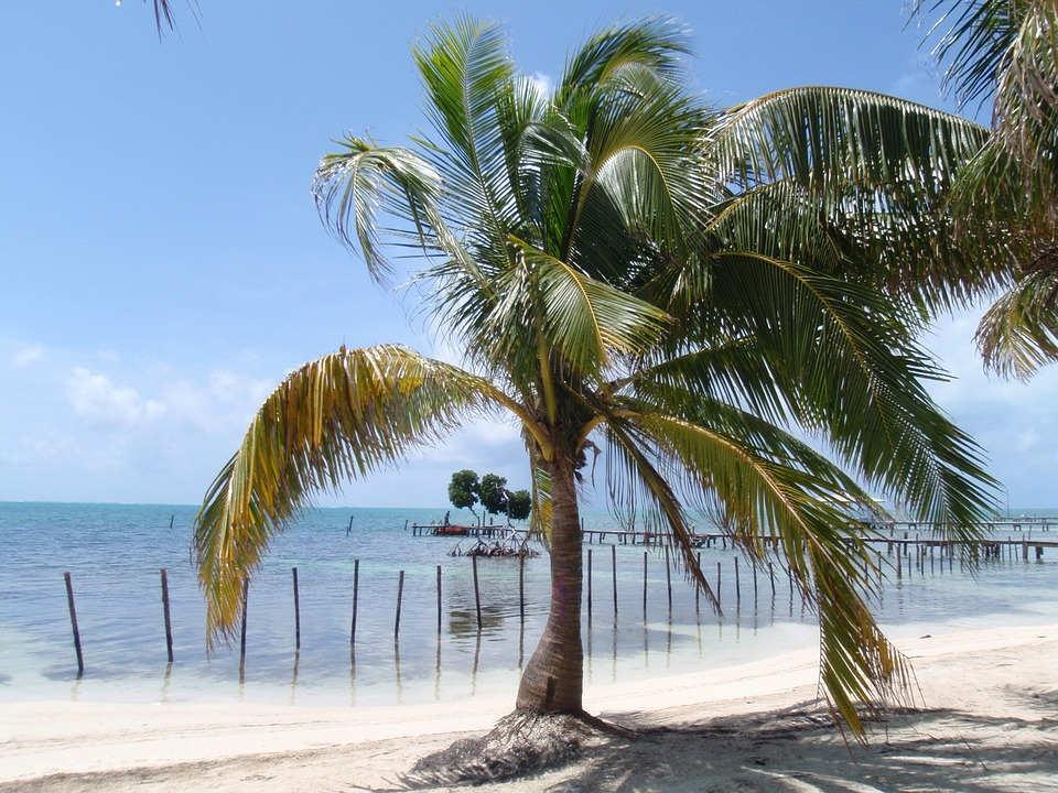 Coconut, Trees, Beach