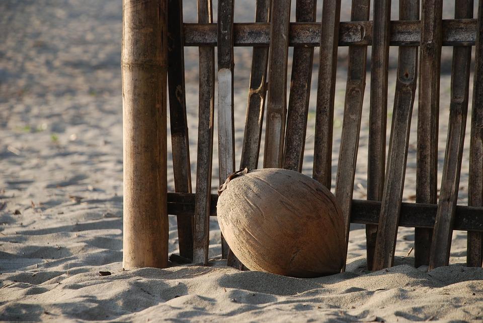 Coconut, Beach, Sand, Fence