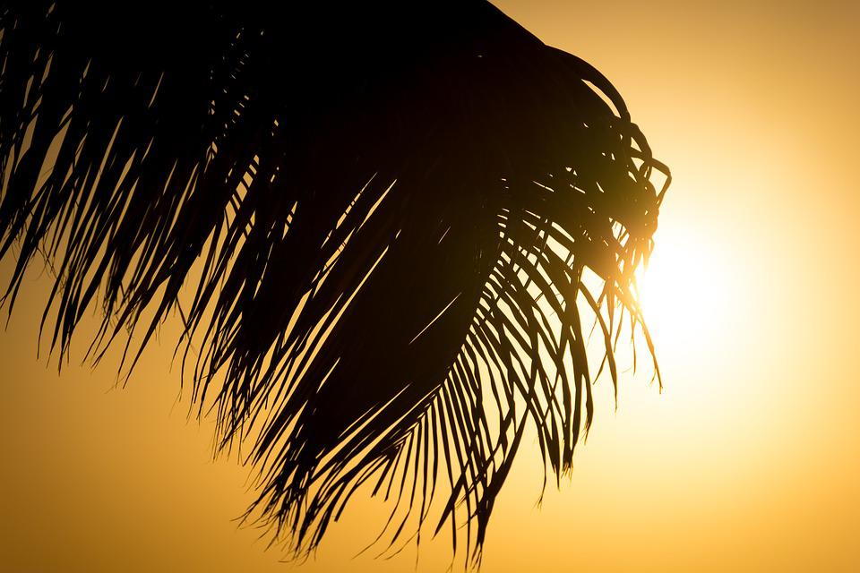 Frond, Palm Tree, Sun, Sea, Beach, Leaves, Coconut