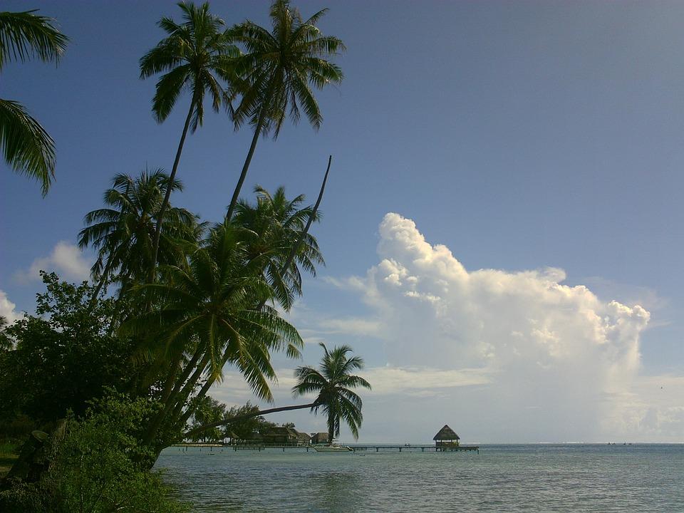 Coconut, Lagoon, Polynesia